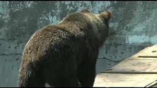 Медведи выходят на охоту