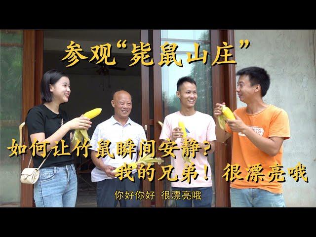 王刚去华农兄弟家参观竹鼠基地,刘苏良用兄弟家的玉米来招待