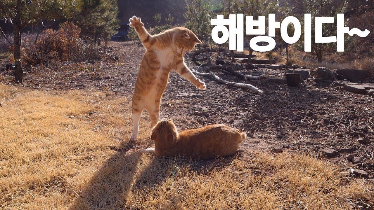 (ENG)한파가 끝나고 신난 산골 고양이들(feat.얼음 계곡)