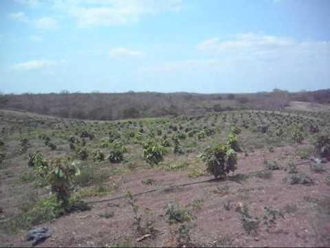 可可樹,台灣人的可可農場Building a Cacao Farm