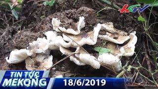 Đột nhập ma trận nấm mối được ủ bằng chất kích thích | TIN TỨC MEKONG - 18/6/2019