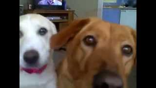 How Quickly Does Dog Training Work - Puppy Training Videos