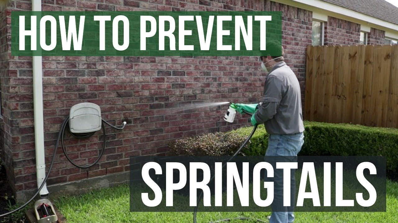 How to Get Rid of Springtails Naturally - Pest Control Guides - Info
