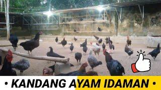 Download Video INTIP KANDANG AYAM IDAMAN MP3 3GP MP4