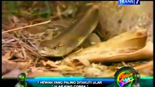 7 hewan yg plg ditakuti ular