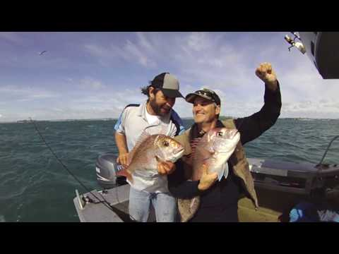 Snapper Fishing Auckland NZ With Sea Genie Charters