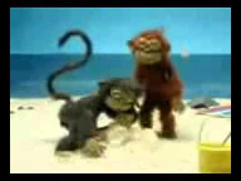 Monkey ewe pasir