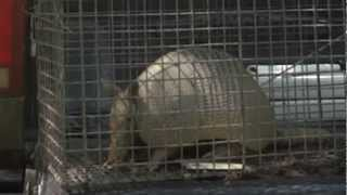 Armadillo Trappin' Part 4