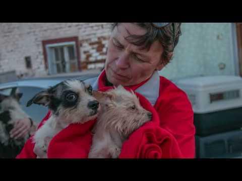 68 Hunde und eine Katze aus Animal Hoarding Fall
