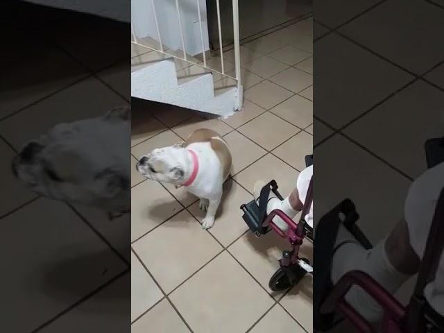 Dog Dances to Grandma's Singing – 990738