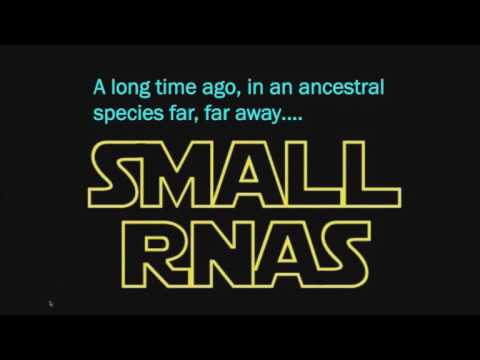 Genetic Screens with CRISPR: A New Hope in Functional Genomics