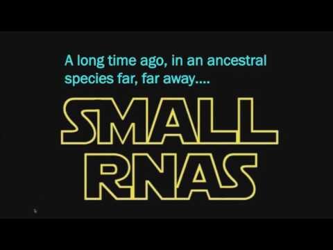 Genetic Screens with CRISPR: A New Hope in Functional Genomics