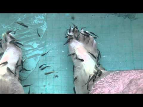 Fish Cleaning Dead Skin From Feet