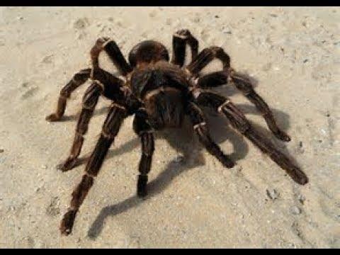 parodie l'araignee
