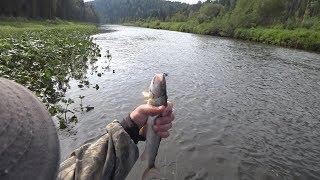 Рибалка у верхів'ї Колвы 2017