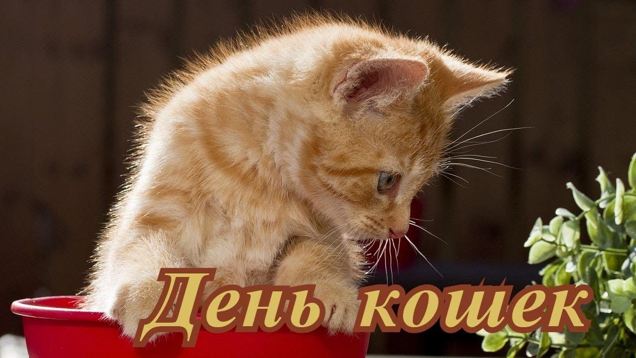 Прикольные поздравления день кошек фото 31