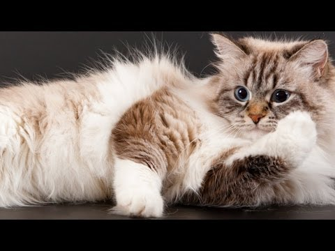 7 Things That Your Cat Would Never Tell You