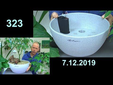 Bonsai einfach Umpflanzen,