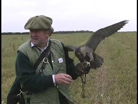 Frank Taylor Films No. 007  -  A Flight at Red-legged Partridge