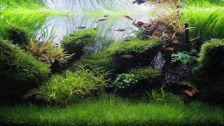 120cm Aquascape featuring theOne fixture from LUPYLED