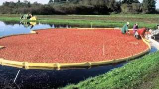 The Ocean Spray Cranberry Bog at Patriot Place