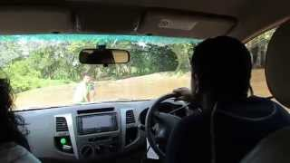 Stuck in Manik river, 4x4 off roading Yala Block 2, Sri Lanka