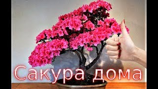Сакура aliexpress