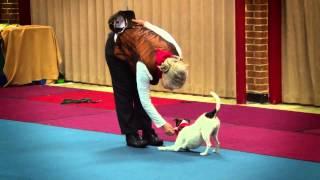 Dogs Gone Dancin' V - Man's Best Friend