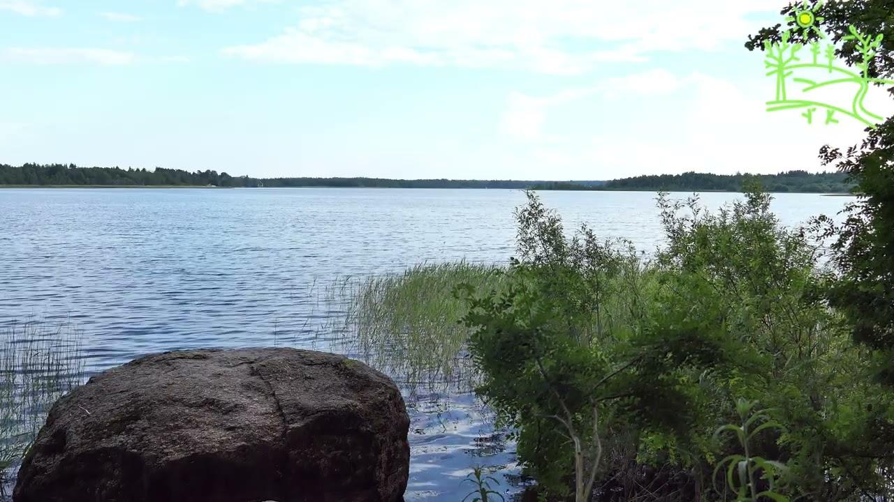 🦆Звуки природы🦆 Озеро 4К 🦋Живая природа🦋 Пение птиц