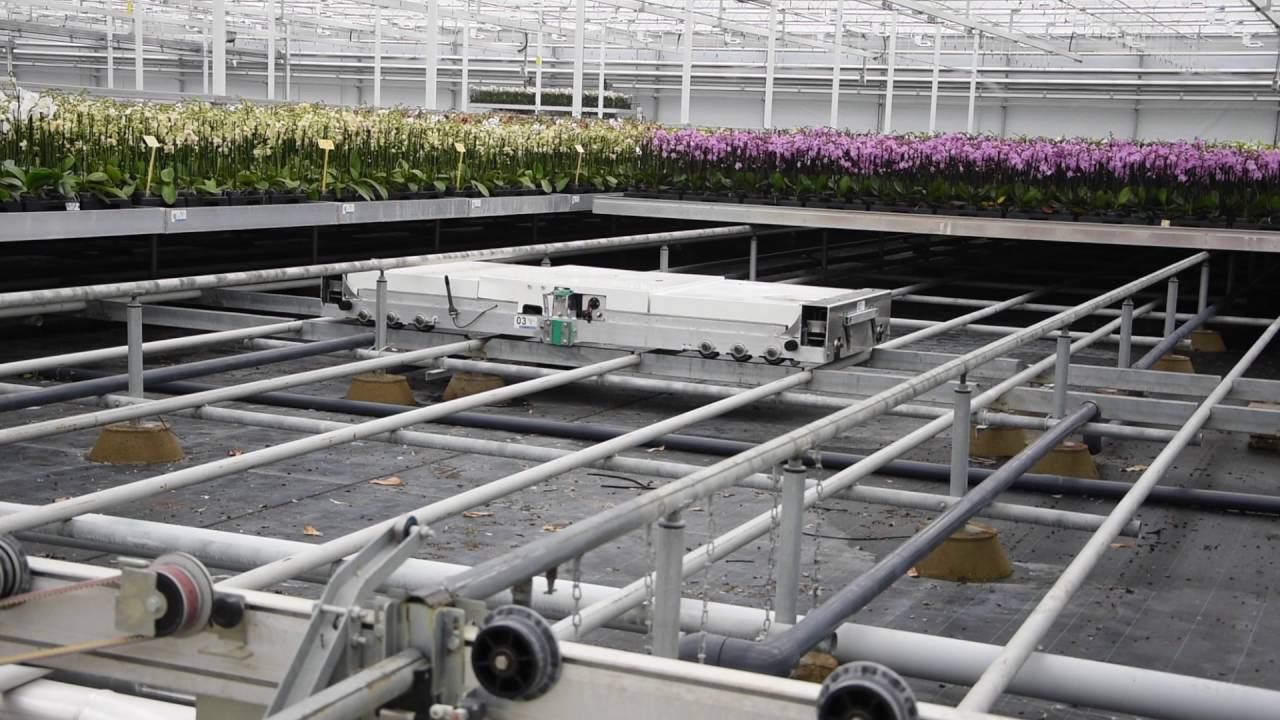 T Hoog Bos Project Automatic Orchid Greenhouse Youtube