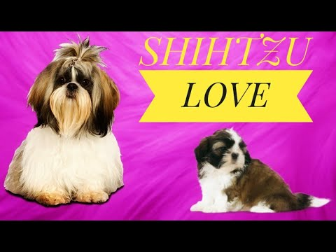 Shih Tzu Puppies: Our New Family Members 😍 | Best Dog Breeds For Home | HYD Pet Entertainment