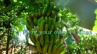 Raw Vacant Farm Land Lot For Sale.mp4