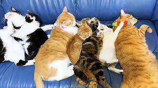 ソファを猫たちに占領されました