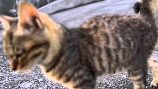 香川県多度津町沖に浮かぶ猫の島、佐柳島。 人と猫の距離が近くて、存分...