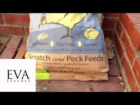 THỨC ĂN HỮU CƠ, NON-GMO DÀNH CHO GÀ (Organic non-GMO chicken feed) - EVA ESSENCE