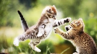 FUNNY CATS AND KITTENS COMPILATION (HD) [Funny Pets]