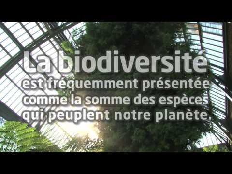 Biodiversité et interactions entre espèces Muséum national d'Histoire naturelle itv Robert Barbault
