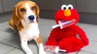 Funny Elmo makes Strawberry Ice Cream for Cute Dogs Louie and Marie