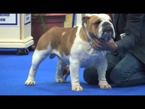 Manchester Dog show 2017 - Utility group FULL