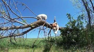 СОБАКИ В ЗАМЕДЛЕННОЙ СЪЕМКЕ (СЛОУ МО) dogs in slow motion