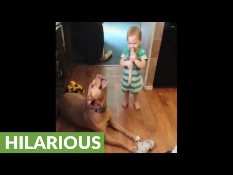 Incredible Pit Bull lets out impressively long howl