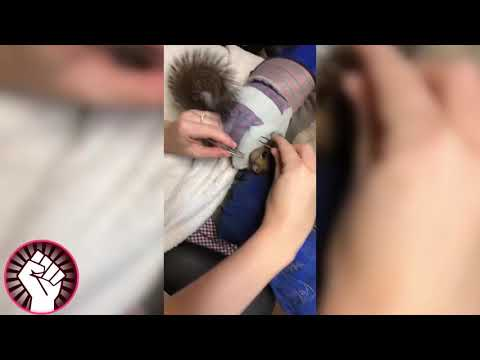 Rescue Squirrel! Remove Huge Botfly From Squirrel - Cuterebra Larva Removal