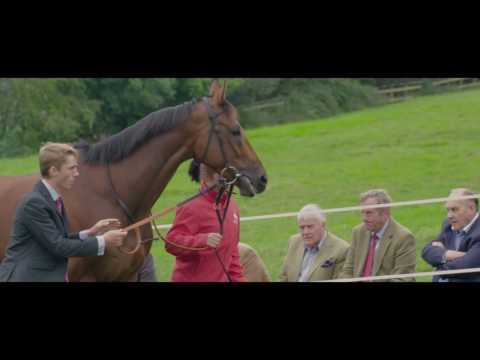Paul Nicholls Open Day 2016 - PART 3