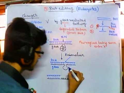 Guide RNA dependent RNA editing