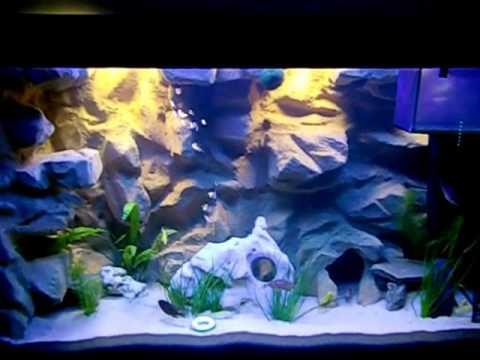 red rote cichliden lifalilis und jellows barsche malawi african 240l tank aquarium youtube. Black Bedroom Furniture Sets. Home Design Ideas