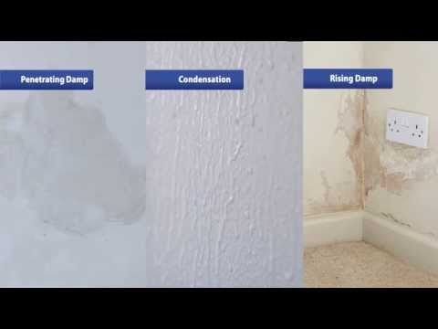 How to Find and Fix Your Damp Problems