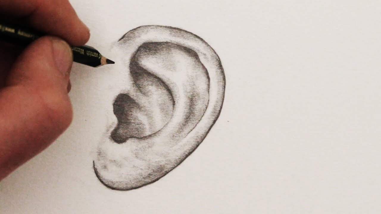 Line Drawing Ear : How to draw ears step by youtube