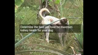 Natural dog food for diabetic dogs | improve dog health with natural dog food for diabetic dogs