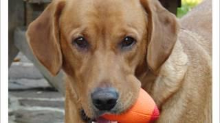 My Heart Dog Lucy B