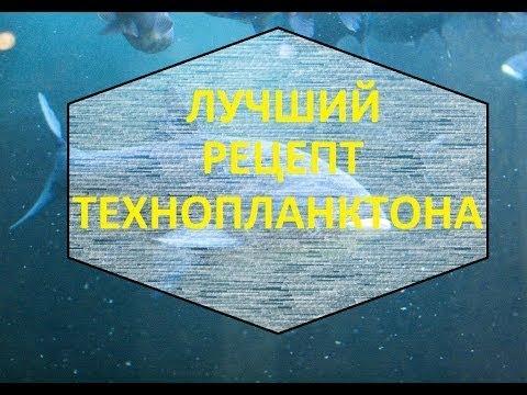 Рецепт изготовления технопланктон в домашних условиях